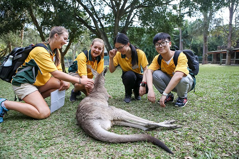 You, A 'Roo, and Australia Zoo
