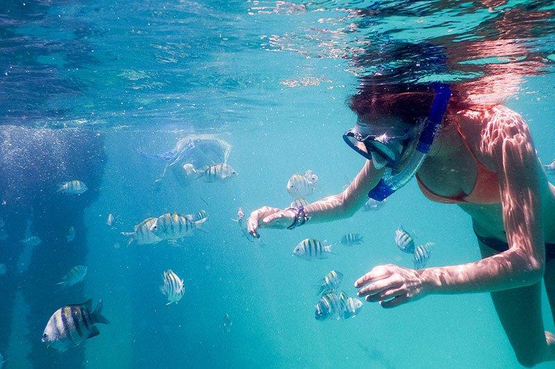 Marine Life and Coastal Restoration