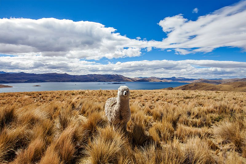 Lake Titicaca Service Adventure