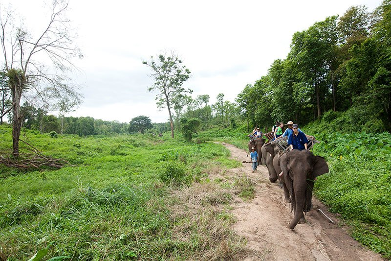The Thai Elephant Conservation Project