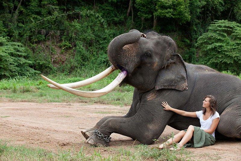 Elephants and Amazing Thailand (College Program)