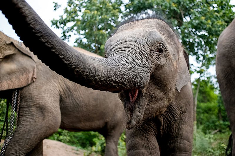 Children's Home and Elephant Sanctuary Project